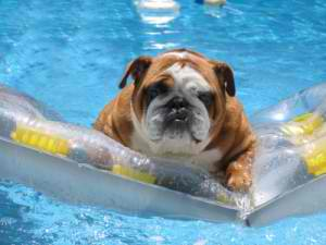 pet safety, Elite Pools