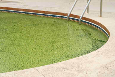 Three Ways to Get Rid of Green Pool Water for Good | Elite Pools of Houston Texas
