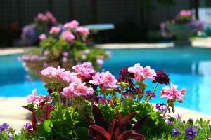 Landscaping Ideas for Small Backyards in Houston | Elite Custom Pools Houston Texas